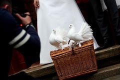 White Doves and a wedding couple Stock Photo