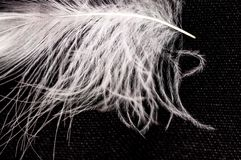White down feather on black background, close up, macro. White down feather on black background, close-up, macro royalty free stock photo