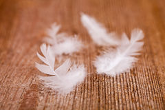 Free White Downy Feathers Stock Images - 29501654