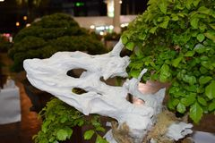 White Dragon. Bonsai Event in Hua-Hin, Tree, art Stock Photos