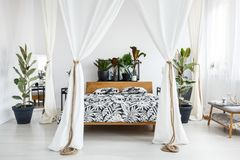 White drapes in bright bedroom. Plants on wooden bedhead of bed with patterned bedding and white drapes in bright bedroom interior with grey bench Stock Photos