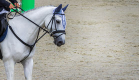 White dressage horse and rider. White horse portrait during dressage competition. Royalty Free Stock Photography