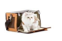 White dressing cat in a handbag Stock Photos