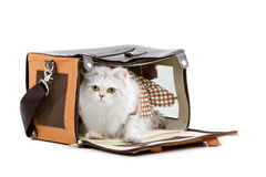 White dressing cat in a handbag Stock Photo
