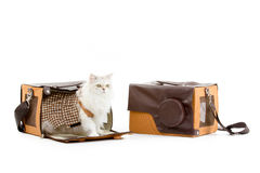 White dressing cat in a handbag Stock Photography