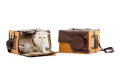 White dressing cat in a handbag Royalty Free Stock Photo
