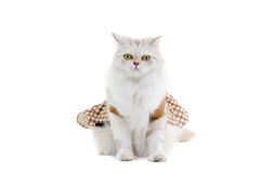 White dressing cat isolated on white Royalty Free Stock Photos