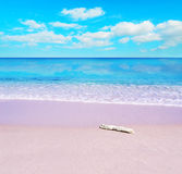 White driftwood on a pink beach Royalty Free Stock Photography