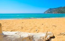 White driftwood in Porto Ferro. Sardinia Royalty Free Stock Photos
