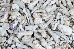 White dry corals Royalty Free Stock Images