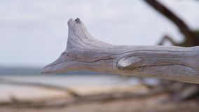 White dry driftwoods on the shoreline stock video footage