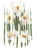 White dry orchid flowers on multicolor pressed decorative green Stock Photography