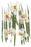 White dry orchid flowers on multicolor pressed decorative green. Grass Stock Image