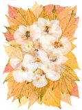 White dry orchid flowers on pressed  maple leaves Stock Photo
