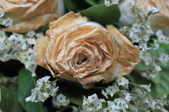White Dry rose after valentine day, Faded rose Royalty Free Stock Images