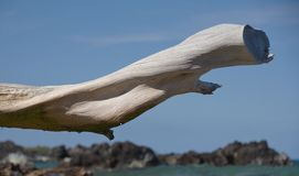 White dry wood branch framing lava rocks at Beach 69 Stock Photos