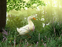 White duck - purple wildflowers Royalty Free Stock Photo