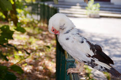 White Duck standing  at the railing Stock Images