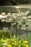 White ducks resting in a shade by a pond on summer day Stock Photography