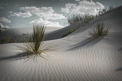 White Dunes Royalty Free Stock Image