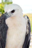 White eagle. In a park Royalty Free Stock Photos