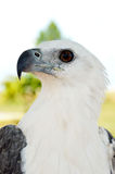 White eagle. In a park Royalty Free Stock Photography
