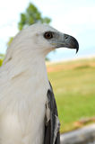 White eagle. In a park Stock Images