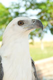 White eagle. In a park Stock Image