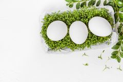 White Easter background eggs green cress Royalty Free Stock Photos