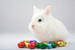 White easter bunny with chocolate eggs Royalty Free Stock Photos