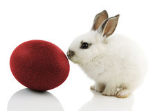 White Easter Bunny with red egg. On white background with reflections Stock Photos
