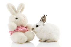 White Easter Bunny with toy rabbit. On white background with reflections Royalty Free Stock Photography