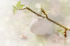 White easter egg and cherry blossom on a pastel green pink backg Royalty Free Stock Image