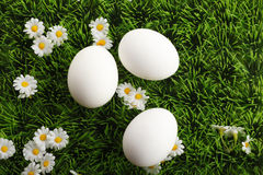 White easter eggs with daisy flowers in grass Stock Photos