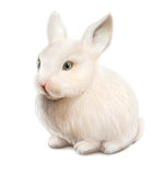 White easter rabbit Stock Image
