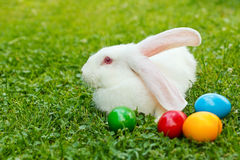 White easter rabbit in green grass Stock Photography