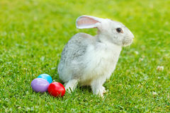 White easter rabbit in green grass Royalty Free Stock Image
