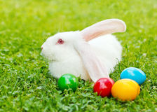 White easter rabbit in green grass Stock Photos