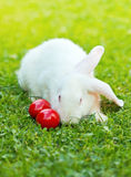 White easter rabbit in green grass Royalty Free Stock Photography