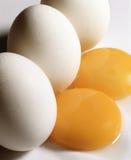 White  egg Stock Image