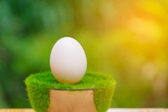 White egg on artificial grass in pot, on wooden table with green Stock Photo