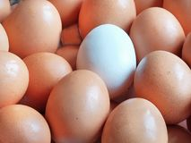 White egg on a beige background. Fresh chicken eggs close up royalty free stock photo