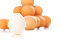 White egg with brown eggs Royalty Free Stock Images