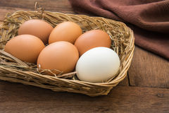 White egg and brown eggs in basket Royalty Free Stock Image