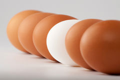 White egg among brown ones Stock Photo