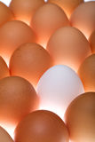 White egg between brown ones Royalty Free Stock Photos