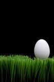 White egg on grass Royalty Free Stock Photos
