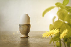 White egg in handcrafted egg cup with spring leaves and flower Stock Photos