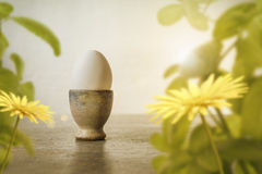 White egg in handcrafted egg cup with spring leaves and flower Royalty Free Stock Images