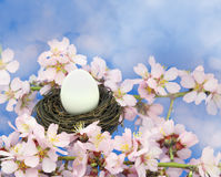 White egg in the nest Royalty Free Stock Photo